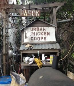 1733 Sacramento 2 Chickens