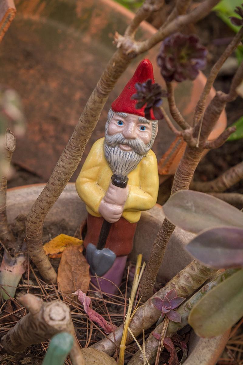 Quirky Berkeley | Garden Gnomes of Berkeley