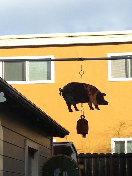 Pig 6