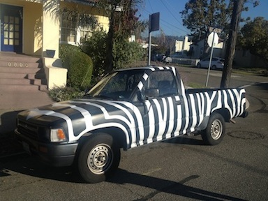 Zebra Painted