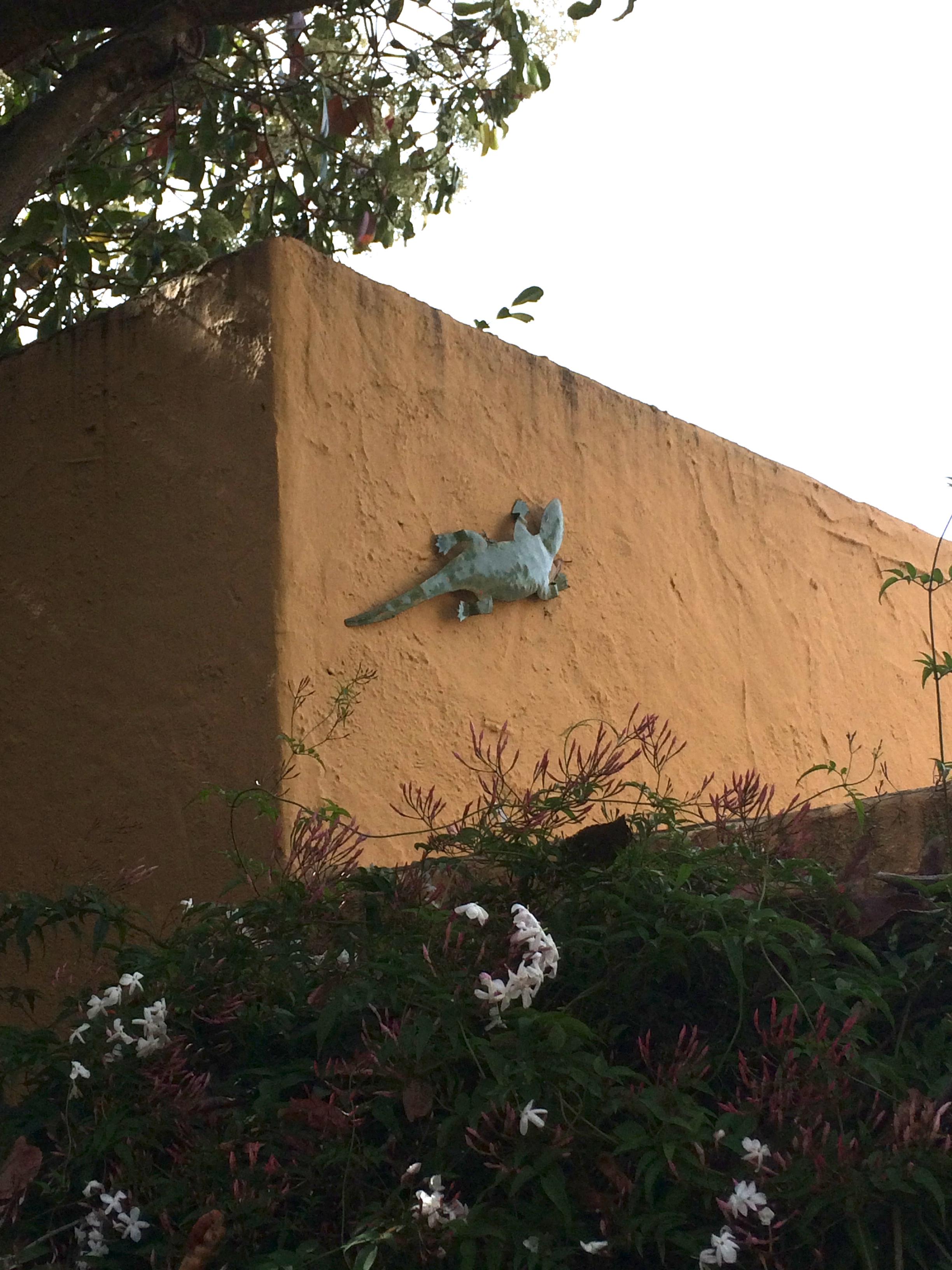 Quirky Berkeley Geckos