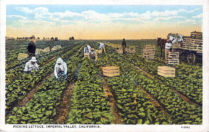 Lettuce Workers Postcard