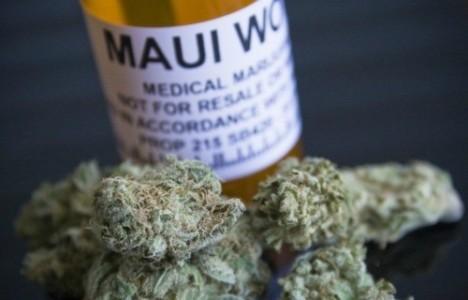 maui-wowie-marijuana-strain-31