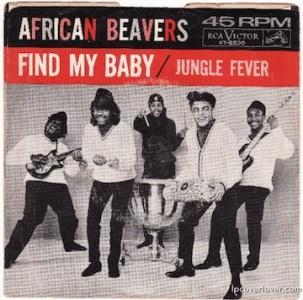 AfricanBeavers.web_-500x494
