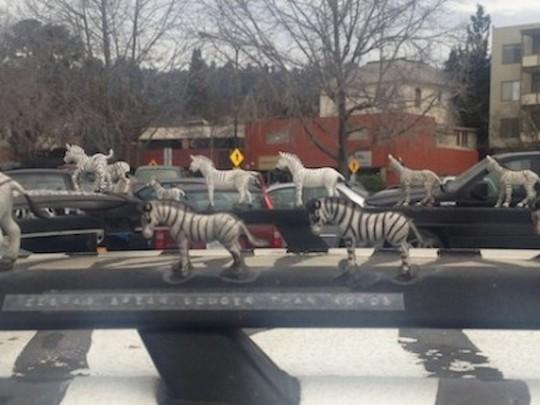 Zebra Car 2