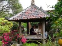 Avi-in-pagoda