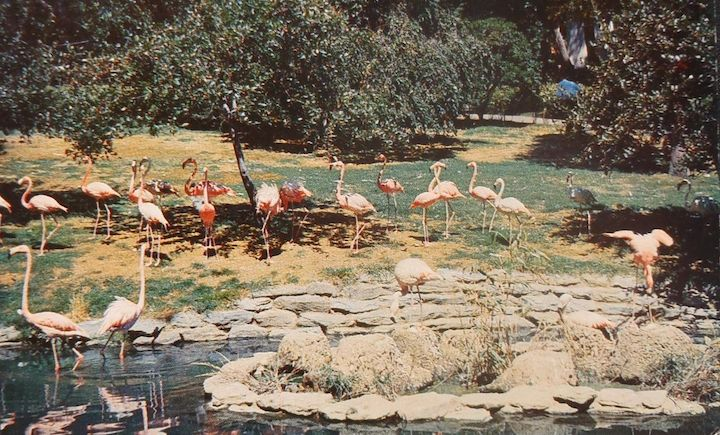 Flamingos Philadlephia zoo