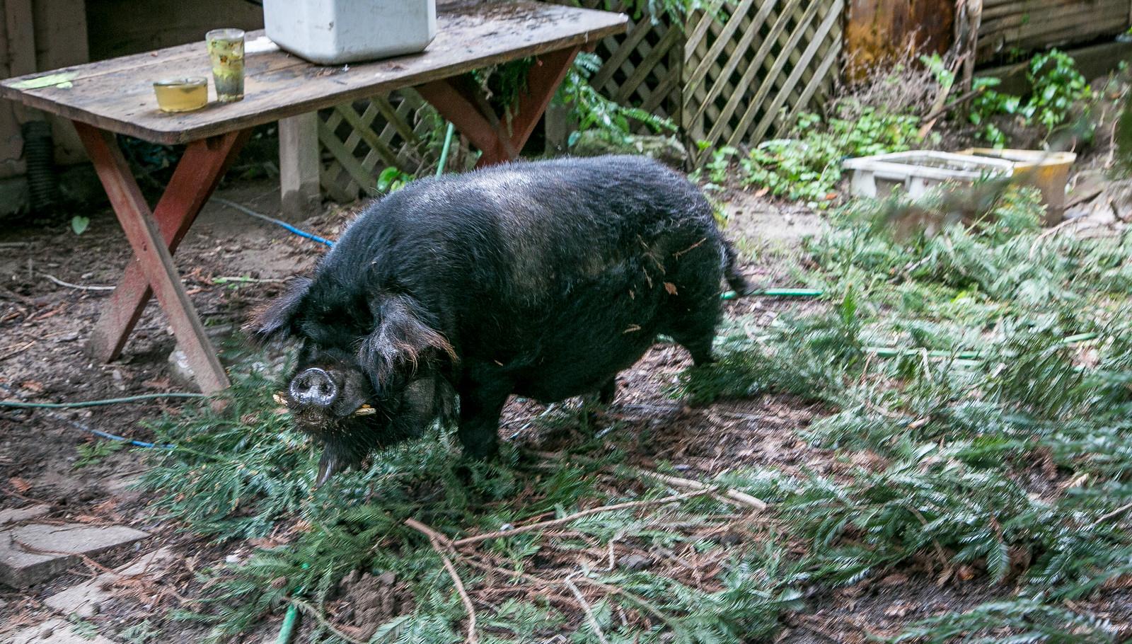 Piggy Treasure