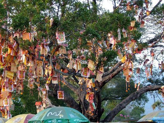 Photo: https://www.tripadvisor.com/Attraction_Review-g294217-d487237-Reviews-Lam_Tsuen_Wishing_Tree-Hong_Kong.html