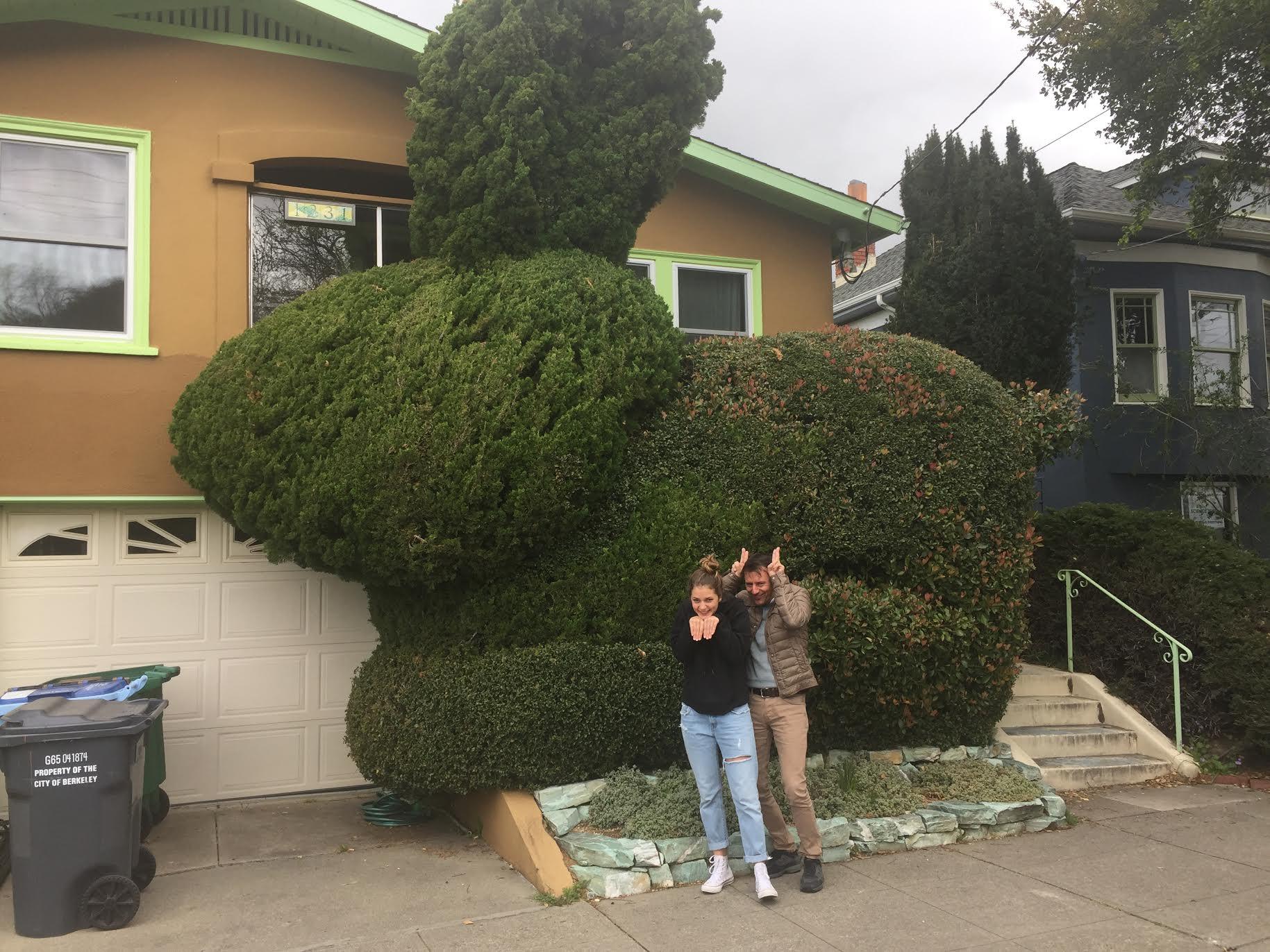 Bunny topiary, Ward Street