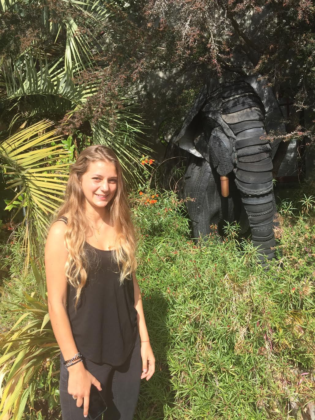 Cedar and Scenic, elephant