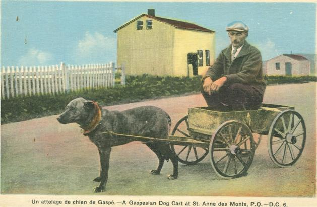 gaspesian-dog-cart-at-st-anne-des-monts